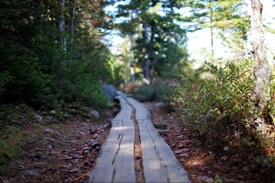 Bike Trail in Maine Woods